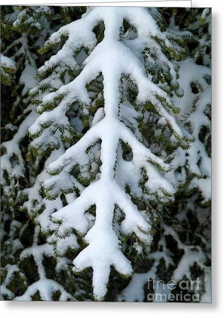 Fir Trees Greeting Cards - Snowy fir tree Greeting Card by Sami Sarkis