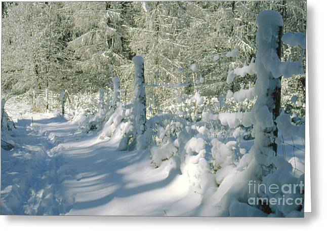 Snow-covered Landscape Greeting Cards - Snowy Footpath in Winter Wonderland Greeting Card by Heiko Koehrer-Wagner