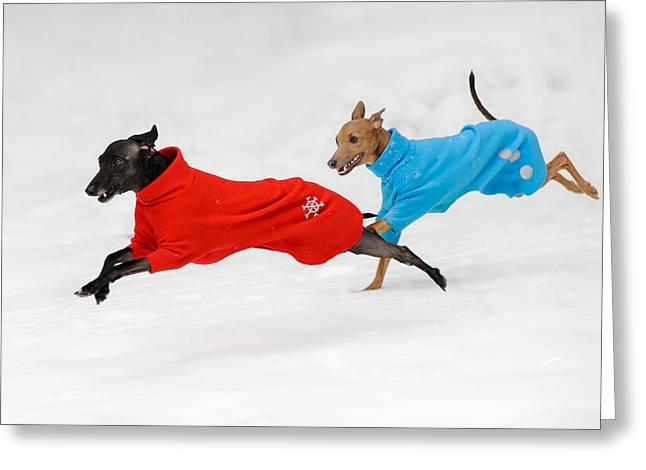 Greyhound Dog Greeting Cards - Snowy Fun Greeting Card by Ari Salmela