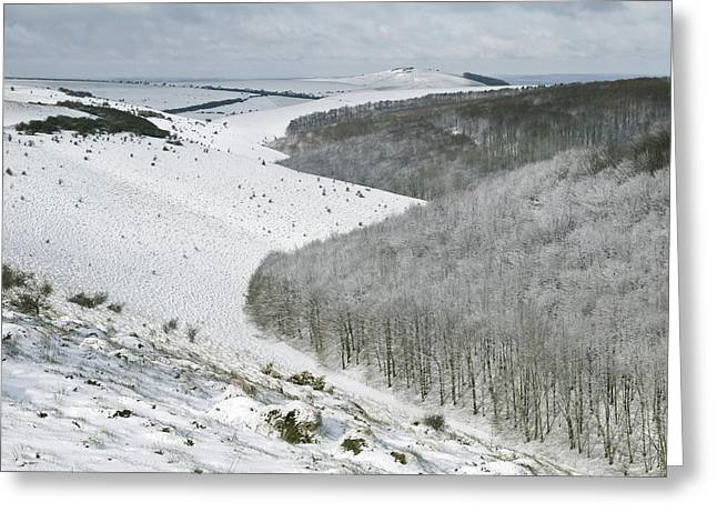 Snow On The Ground Greeting Cards - Snowy Landscape, Dorset Greeting Card by Adrian Bicker
