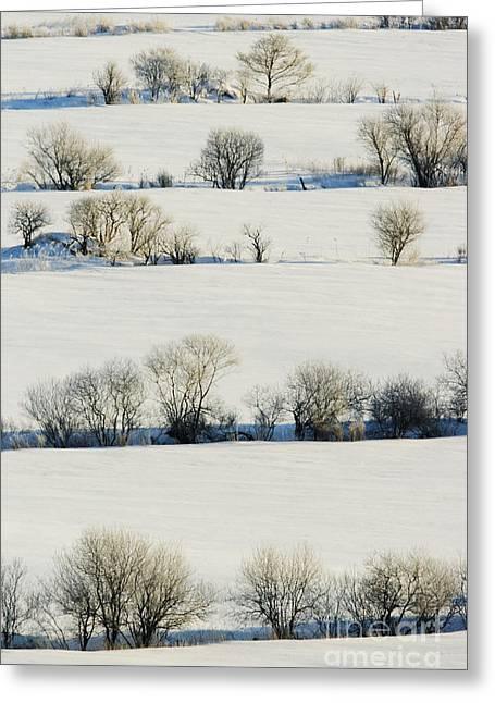 Snowy Landscape Greeting Card by Jeremy Woodhouse