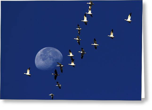 Waning Moon Greeting Cards - Snowy Moon Greeting Card by Tony Beck