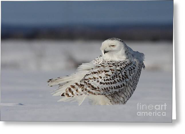 Mystic Art Photographs Greeting Cards - Snowy Owl-Diabolique Greeting Card by Mircea Costina Photography