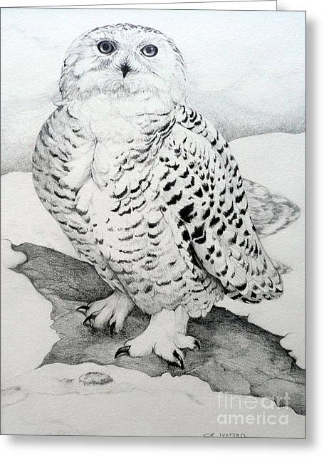Wild Life Drawings Greeting Cards - Snowy Owl Greeting Card by Jill Iversen