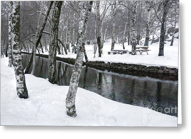 River Scenes Photographs Greeting Cards - Snowy Park Greeting Card by Carlos Caetano
