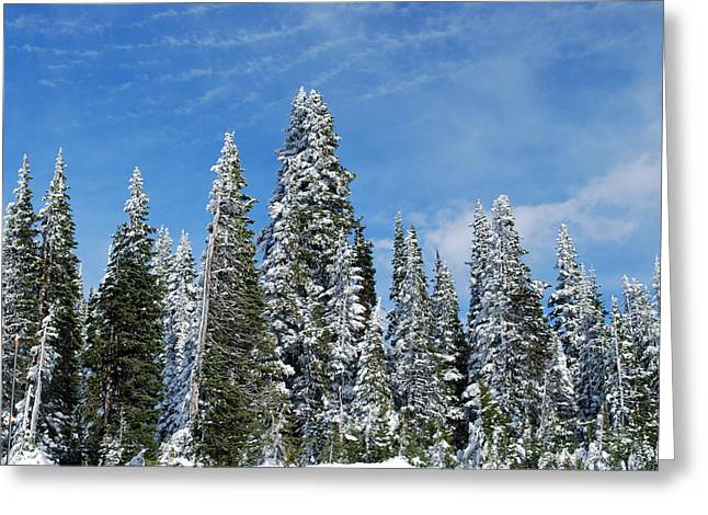 Snowy Pines At Mount Rainier Greeting Card by Twenty Two North Photography