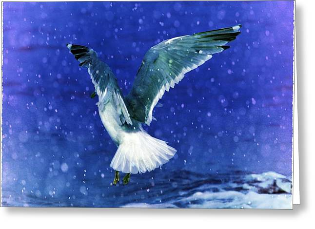 Seagul Greeting Cards - Snowy Seagull Greeting Card by Debra  Miller