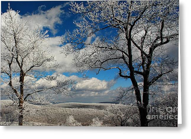Snow And Trees Greeting Cards - Snowy Sunday Greeting Card by Lois Bryan