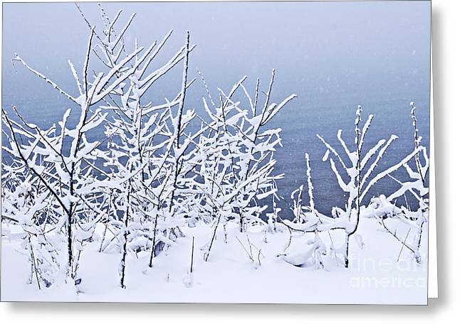 Winter Park Greeting Cards - Snowy trees Greeting Card by Elena Elisseeva