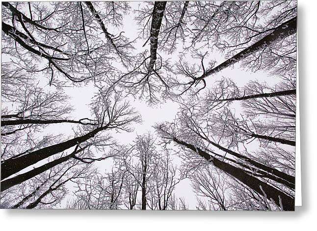 Winter Photos Greeting Cards - Snowy Treetops Greeting Card by June Marie Sobrito