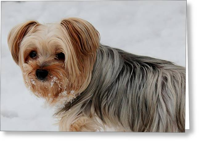 Dogs In Snow. Greeting Cards - Snowy Whiskers Greeting Card by Bonnie Brann