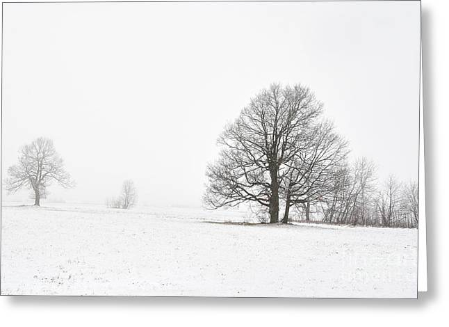 Foggy Day Greeting Cards - Snowy Winter Landscape With Trees Greeting Card by Michal Boubin