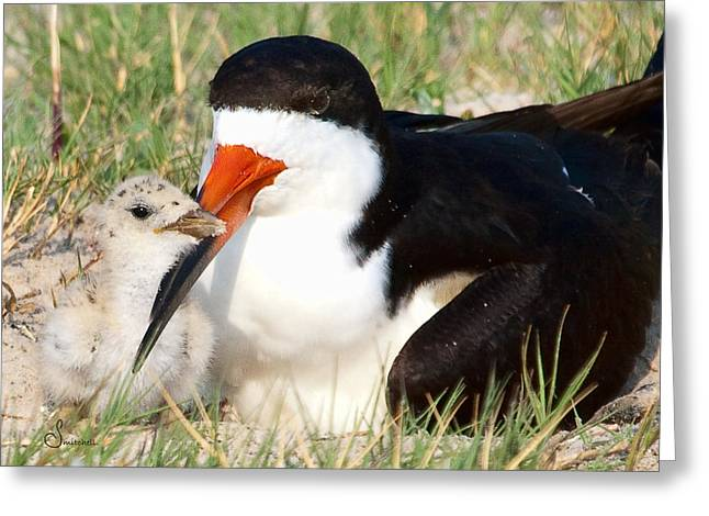 Baby Bird Greeting Cards - Snuggle Greeting Card by Sally Mitchell
