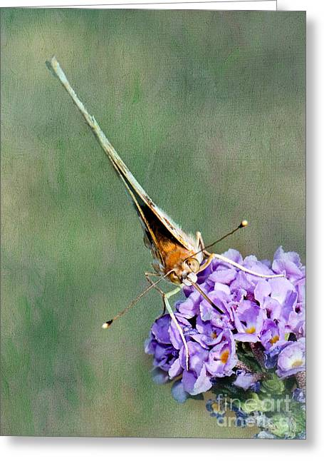 Painted Lady Butterflies Greeting Cards - So What Butterfly Greeting Card by Betty LaRue