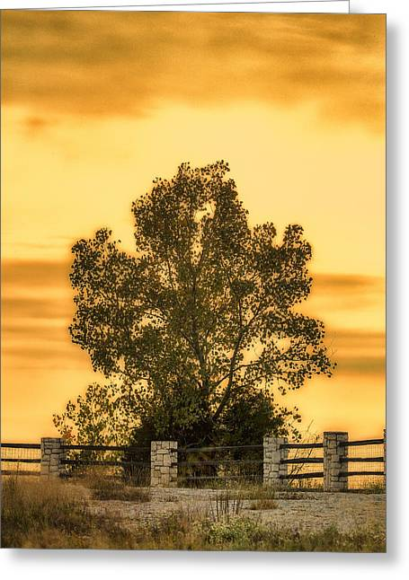 Ledge Greeting Cards - Soaking Up A Sunset Glow Greeting Card by Bill Tiepelman