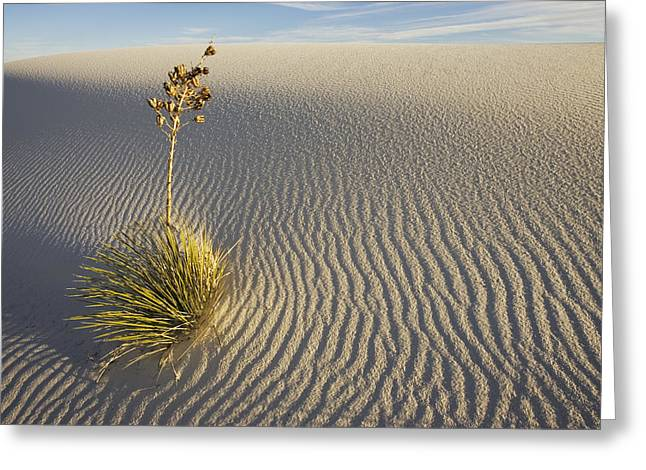 Sand Pattern Greeting Cards - Soaptree Yucca Yucca Elata Growing Greeting Card by Konrad Wothe