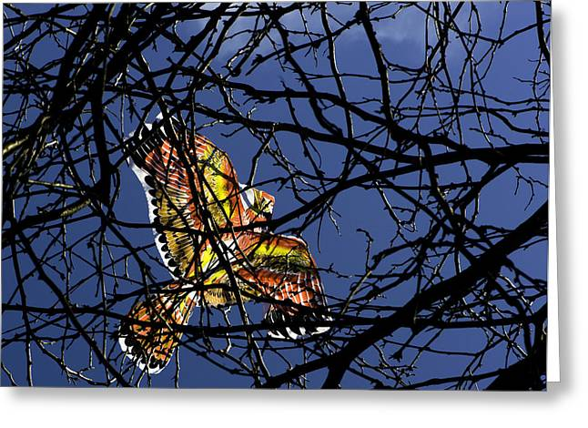 Kites Greeting Cards - Soar  Greeting Card by Andrew Kubica