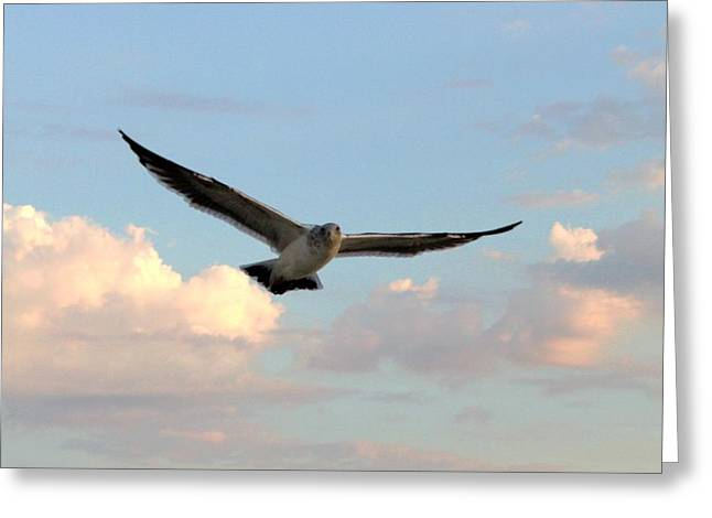 Flying Seagull Greeting Cards - Soar Greeting Card by Caroline Lomeli