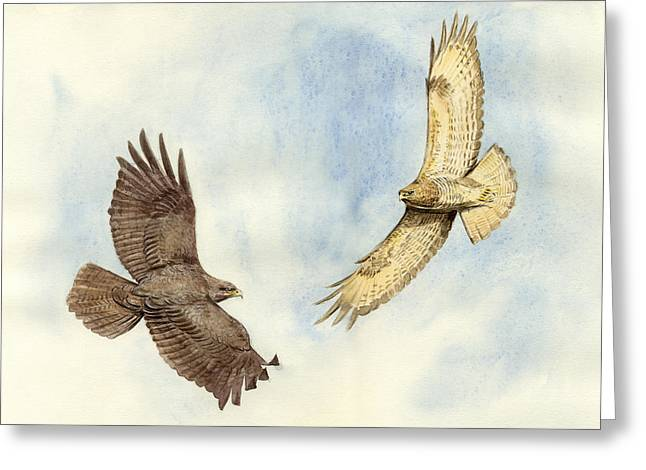 Soaring Paintings Greeting Cards - Soaring Buzzards Greeting Card by Chris Pendleton