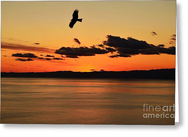 Peregrine Falcon Greeting Cards - Soaring Greeting Card by Dean Harte
