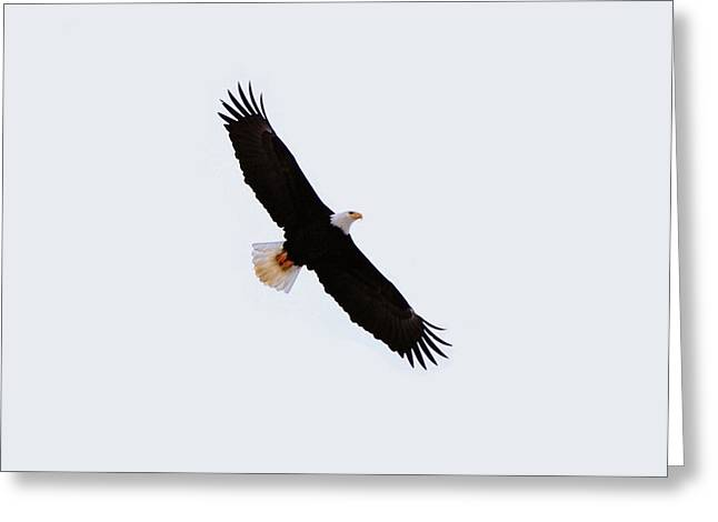 Eagles Greeting Cards - Soaring Eagle Greeting Card by Don Mann