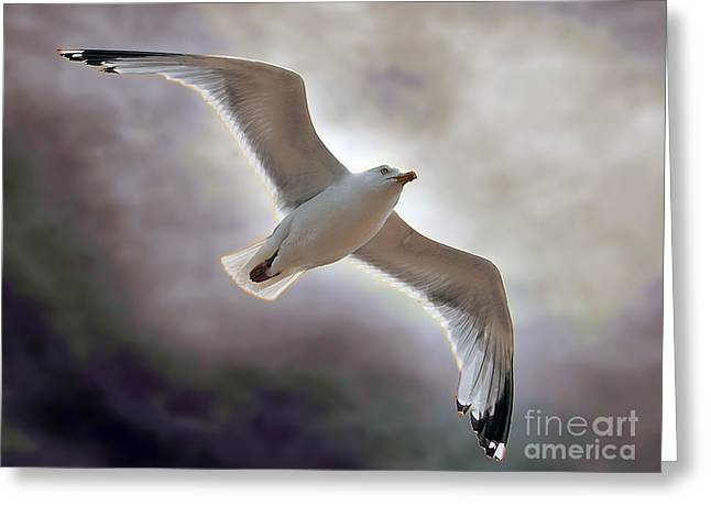 Giclée Fine Art Greeting Cards - Soaring Greeting Card by Graham Taylor
