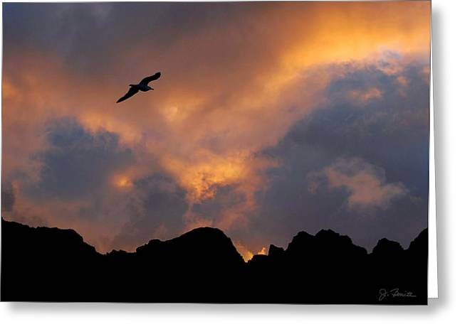 Soaring In The Midnight Sun Greeting Card by Joe Bonita