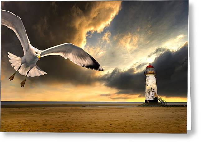 Flying Seagull Greeting Cards - Soaring Inshore Greeting Card by Meirion Matthias