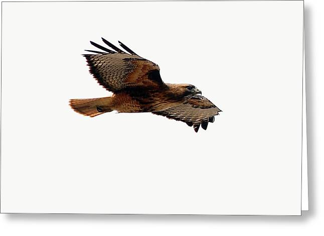 Hawk Greeting Cards - Soaring peacefully Greeting Card by Don Mann
