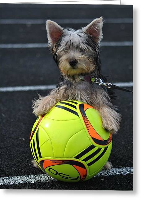 Puppy Pyrography Greeting Cards - Soccer Dog Greeting Card by Dawn Moreland