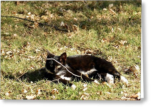 Photos Of Kittens Greeting Cards - Socks Greeting Card by Cheryl Poland
