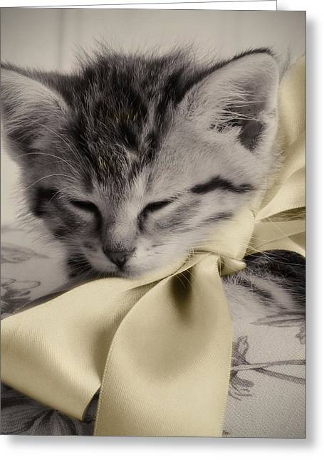 Cat Prints Photographs Greeting Cards - Soft Greeting Card by Amy Tyler