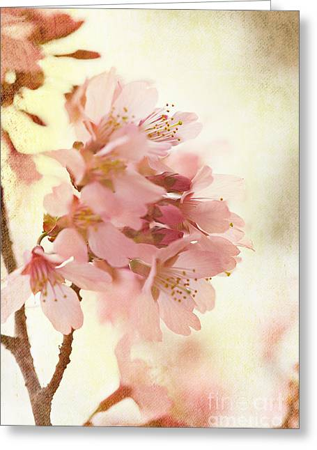 Ladylike Greeting Cards - Soft and Breezy Greeting Card by Kim Fearheiley