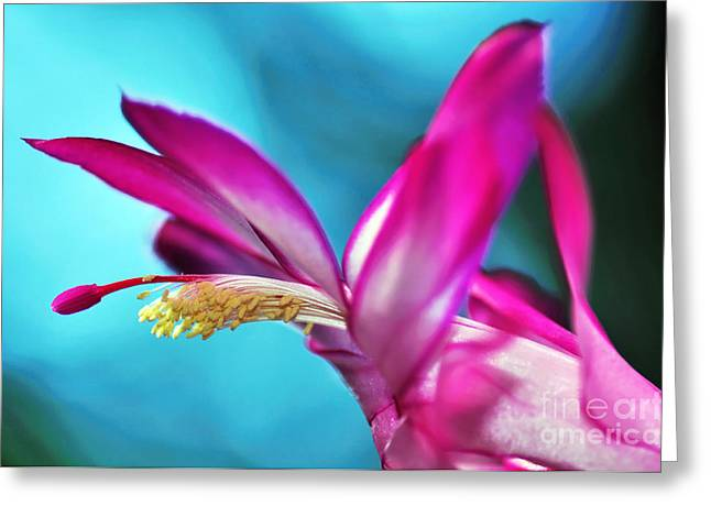 Pinks And Purple Petals Photographs Greeting Cards - Soft and Delicate Cactus Bloom 3 Greeting Card by Kaye Menner