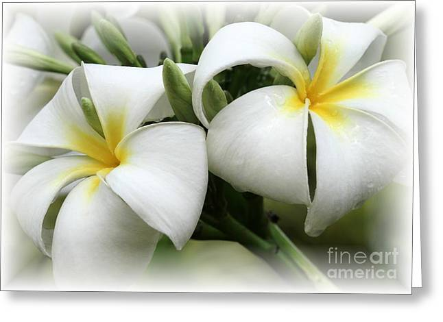Wedding Shower Greeting Cards - Soft and Delicate Plumeria Greeting Card by Sabrina L Ryan