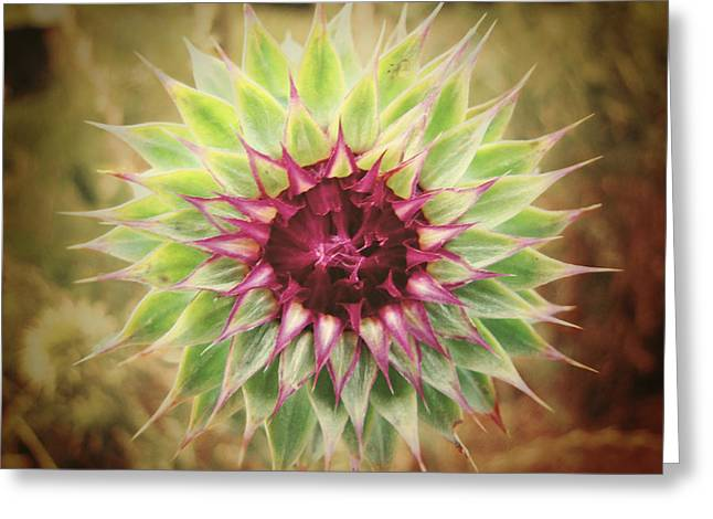 Thistle Greeting Cards - Soft As a Thistle Greeting Card by Amy Tyler