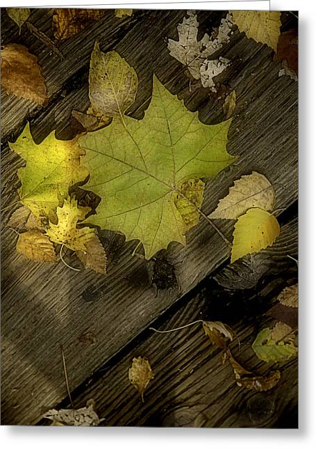 Plant Stretched Canvas Greeting Cards - Soft Autumn Leaves on Wood Greeting Card by M K  Miller