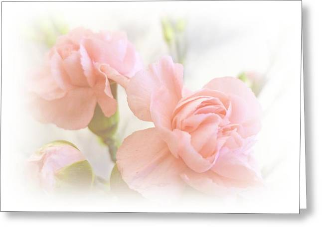 Pink Flower Prints Greeting Cards - Soft Carnations Greeting Card by Sharon Lisa Clarke