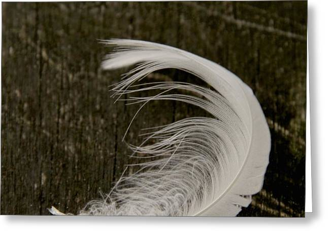 Soft Curve Two Greeting Card by Odd Jeppesen