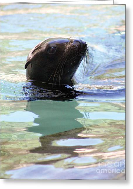 California Sea Lions Greeting Cards - Soft-Eyed Shimmers Greeting Card by Alycia Christine