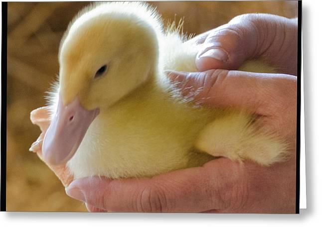 Michigan Greeting Cards - Soft Fluffy Ducky Greeting Card by LeeAnn McLaneGoetz McLaneGoetzStudioLLCcom
