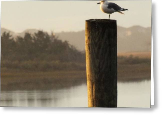 Water Fowl Photographs Greeting Cards - Soft Mornings Greeting Card by Karen Wiles