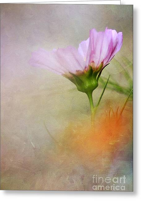 Florescence Greeting Cards - Soft Pastels Greeting Card by Darren Fisher