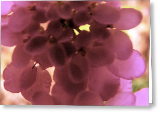 Many Greeting Cards - Soft Pink Petals Greeting Card by Debra     Vatalaro