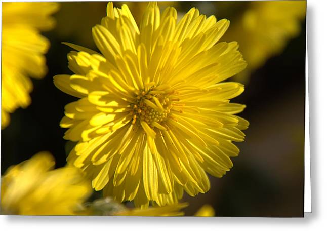 Soft Yellow Glow Greeting Card by Ed Smith