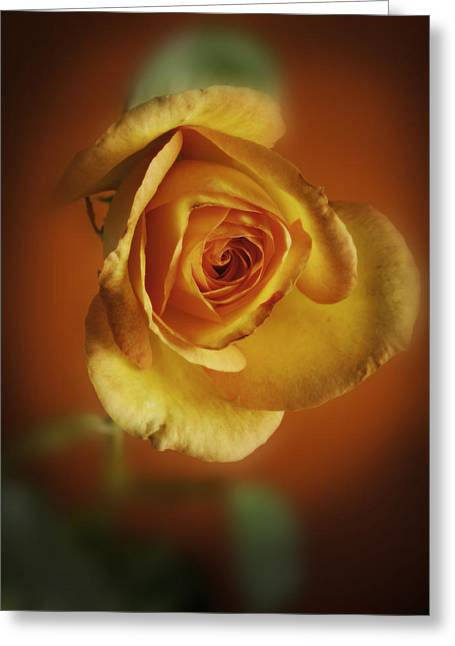 Flower Still Life Prints Greeting Cards - Soft Yellow Rose Orange Background Greeting Card by M K  Miller