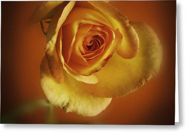 Soft Yellow Rose Orange Background Greeting Card by M K  Miller