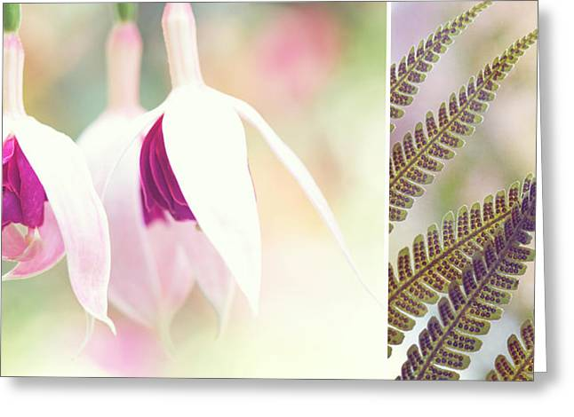 Modern Photographs Greeting Cards - Softly Diptych Greeting Card by Lisa Knechtel