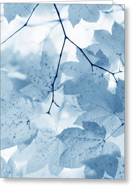 Light And Dark Greeting Cards - Softness of Blue Leaves Greeting Card by Jennie Marie Schell