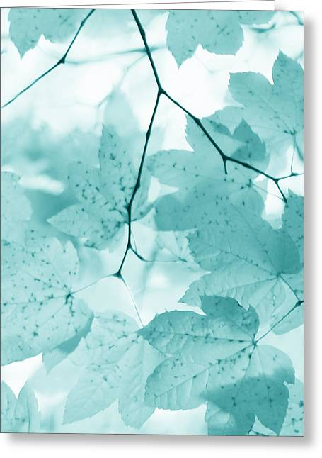 Light And Dark Greeting Cards - Softness of Teal Maple Leaves Greeting Card by Jennie Marie Schell